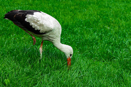 heron bird ornithology animal photography wild life scenic view with vivid green grass clean nature background space 스톡 콘텐츠