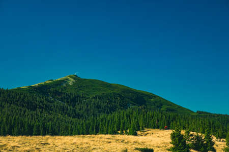 summer mountain landscape scenic view green pine trees cover of June in clear weather day time copy space Banco de Imagens