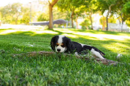 domestic doggy posing in garden nature space on a grass sunny bright lighting scenic view