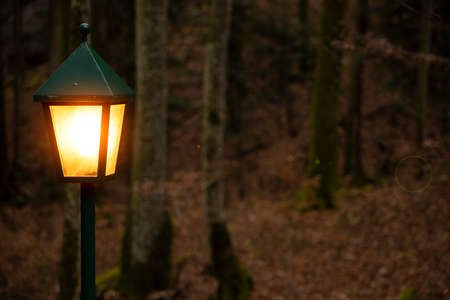 forest lantern orange electricity illumination lighting with glares October November autumn month holidays mystery concept nature landscape scenic view photography Foto de archivo