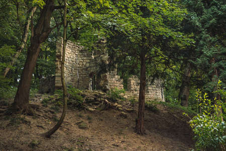castle ruins in forest moody medieval historical landmark scenic view in Central European region