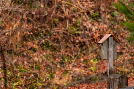 vintage wooden post box back yard autumn time brown and orange colors nature scenic view background photography