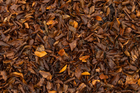 autumn background falling leaves ground brown orange moody wallpaper pattern nature photography in October time