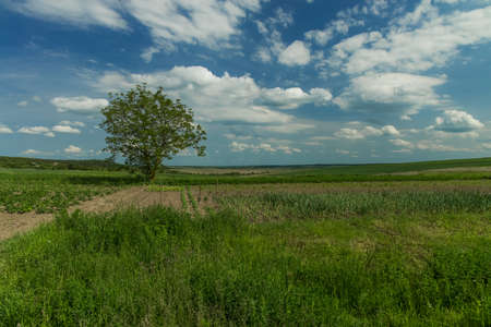 summer field landscape nature scenic view with lonely tree in clear weather day time wilderness country side environment space Фото со стока