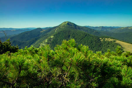 mountain top view green landscape aerial photography clear weather summer July day time needle foliage foreground and horizon background space Фото со стока