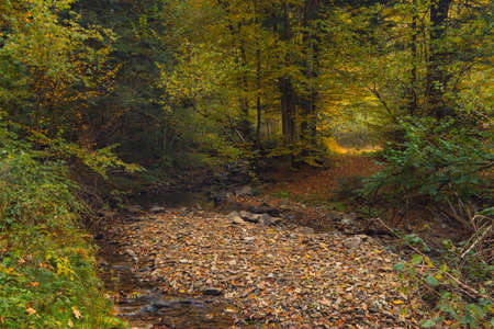 September autumn forest picturesque nature scenic view landscape with orange and yellow foliage of the trees and crush stones trail path way in moody peaceful atmosphere environment space Фото со стока