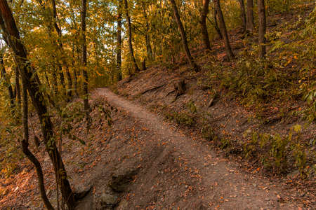 autumn park outdoor nature scenery environment space September orange color landscape with dirt trail path way and without people here