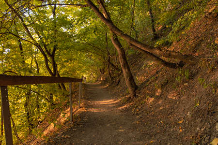 September fall season autumn tome park outdoor wilderness nature scenery environment space with dirt trail path way