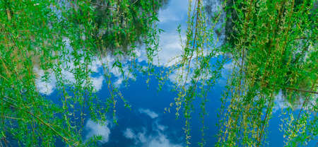 summer nature background scenic view of pond blue water and vivid green foliage bright colorful photography