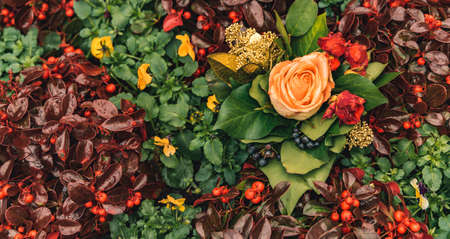 autumn fall season rainy moody flower bed scenic view green brown background photography