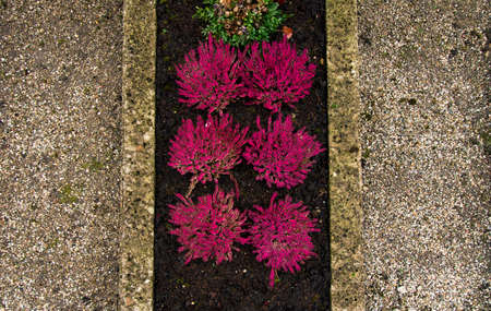 cemetery flower bed gray grave yard foreshortening from above with pink bushes Фото со стока