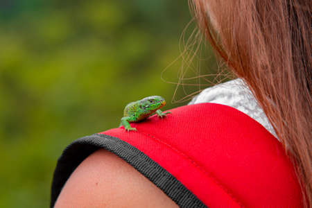 lizard animal photography on girl tender shoulder colorful wild life outdoor scenic view