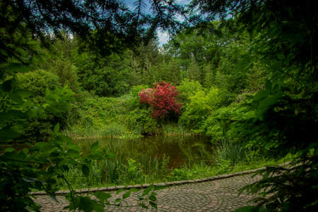 park outdoor forest landscape photography of foliage frame foreground space with scenic view on paved road peaceful lake and vivid red tree blossom nature object Фото со стока