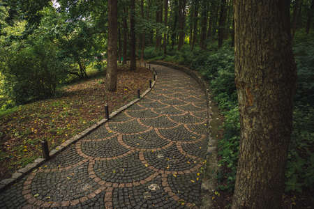 promenade paved road moody autumn park outdoor nature scenic view curved path way for walking in September trees environment space