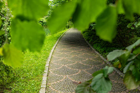 paved road park outdoor promenade walking way in green foliage nature frame work photography concept without people here Фото со стока
