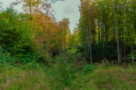 autumn forest nature landscape photography September time highland photography scenic view of trees green and yellow foliage color