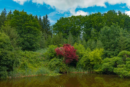 colorful picturesque nature park photography green foliage and peaceful pong with red tree in summer day clear weather time Фото со стока