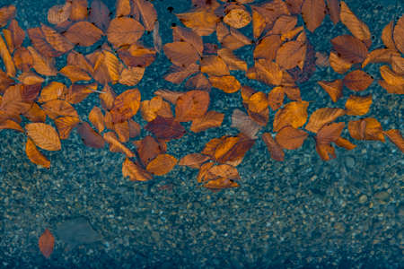 autumn wallpaper background falling leaves pond water surface with empty copy space for your text here Фото со стока