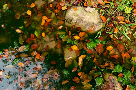 autumn background nature photography of falling leaves yellow and orange foliage near pond water park outdoor scenic view Фото со стока