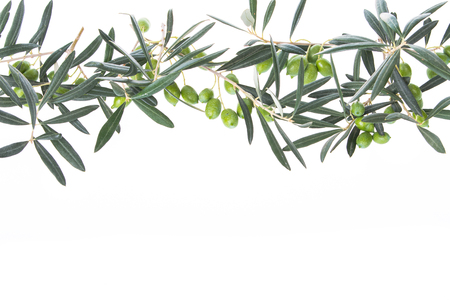 Olive branch with green olives isolated on white background. Olive branches hanging down from above. Green olives with leaves. Copy space.
