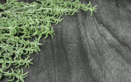 Fresh raw sage bunch on dark wooden table. Green sage herb for tea. Sage branches and leafs on grey background. Salvia officinalis. Copy space for text. Greek Herbal tea.  Standard-Bild