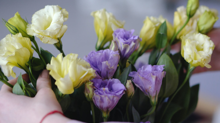 Female hands with beautiful flowers - eustoms of yellow and violet from close range