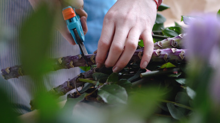Close up of female florist cutting big branch with pruner