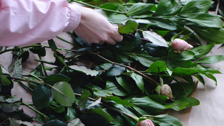 Florist arranges roses for greens to create a bouquet in a flower shop. Close up view