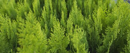 Small business for growing ornamental trees and shrubs. Green seedlings stand close to each other, banner Stock Photo
