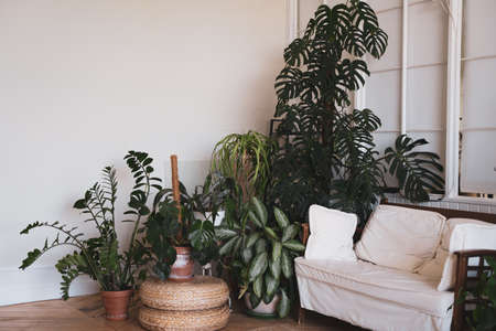 The interior of a comfortable studio. Sofa and indoor plants in gray apartments without people