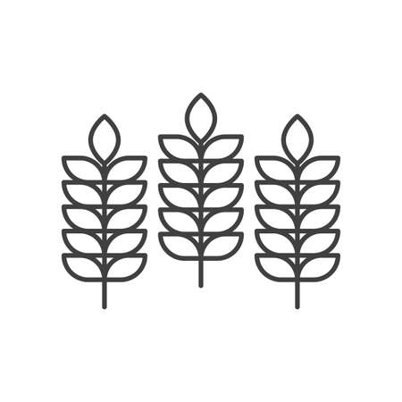 Three spikelets icon. A simple linear image of wheat ears. Isolated vector on a pure white background.