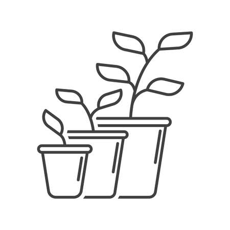 Plant development and growth icon. Simple linear display of growth stages and pot change. Isolated vector on white background.