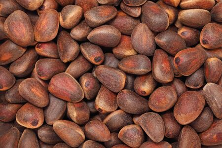 nutshells: Background make from cedar nuts (into nutshells)
