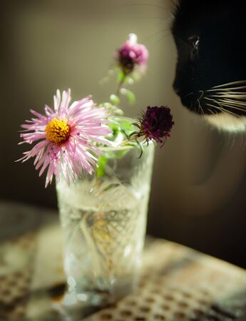 cat sniffing flowers in a vase on the kitchen table