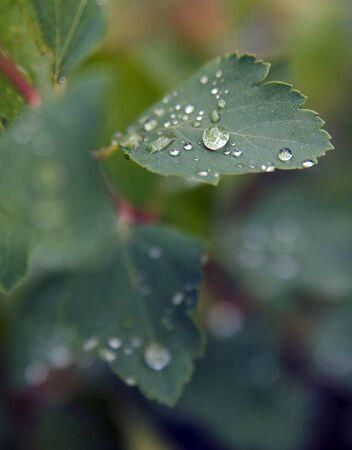 Drop of dew in morning on leaf with sun light Zdjęcie Seryjne