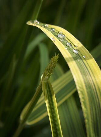 drops of water on a leaf of a stalk
