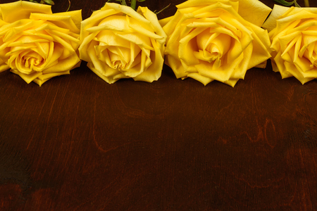 darkwood: Beautiful yellow roses on a dark wooden background. Stock Photo