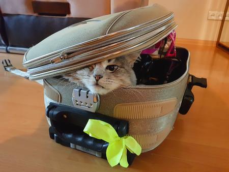 Kat zit in de koffer en wacht op een reis. Reizen met huisdieren concept. Stockfoto