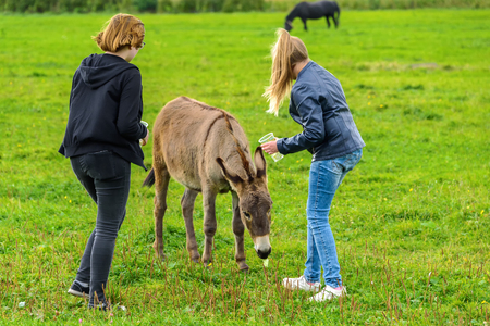 Girls feed the donkey on a green lawn in the fall. Stock Photo