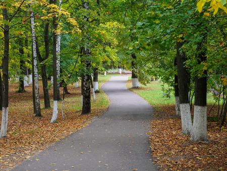Arbres à feuillage jaunissant le long du sentier dans le parc d'automne. Banque d'images