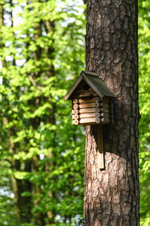 Birdhouse on a tree in the park in spring, birdhouse handmade for birds.
