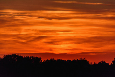 Beautiful color dramatic sunset. Evening sky over the silhouettes of the treetops.