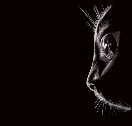 Illustration of a black cat face portrait on a black background close-up. Desktop wallpaper.