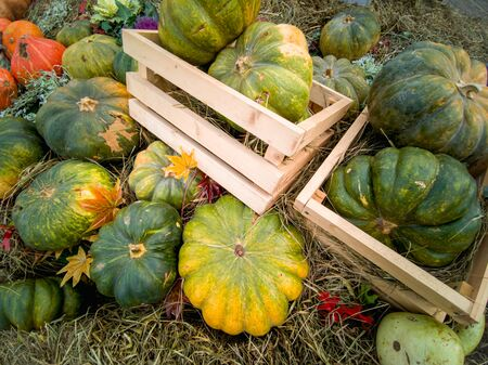 Beautiful ripe pumpkins lie in wooden crates and on straw. Farmers autumn harvest. Gorgeous autumn background with pumpkins.