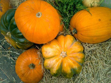 Beautiful ripe pumpkins lie on the straw. Farmers autumn harvest. Gorgeous autumn background with pumpkins. Stok Fotoğraf