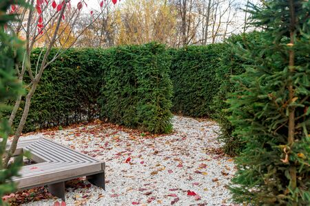 A maze of bushes in an autumn Park. The scenery of recreation for Park visitors.