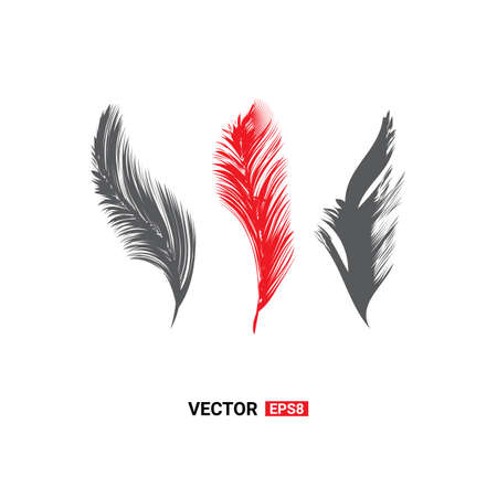 Birds feathers vector icon collection. Simple plume illustration or logo isolated on white background 일러스트