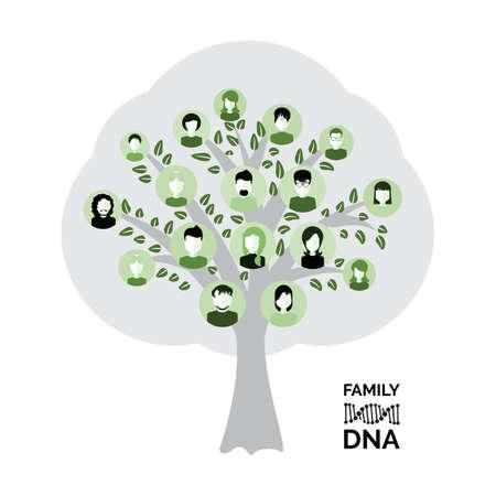 Genealogical family tree with avatars isolated on white background. Genealogy tree for dna ancestors illustration Archivio Fotografico - 114363942