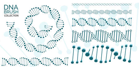 Human dna chain or genome helix isolated. Vector illustration of structural dna molecule seamless line and spiral