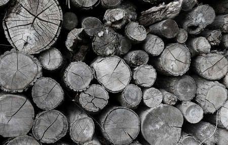 Cross section of tree trunks pattern, old grey round wood cut background or woodpile texture